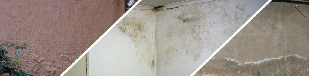 Common signs of damp